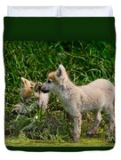 Arctic Wolf Pictures 347 Duvet Cover