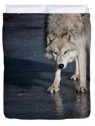 Arctic Wolf Pictures 766 Duvet Cover