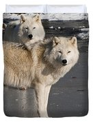 Arctic Wolf Pictures 812 Duvet Cover