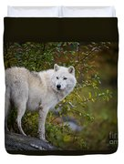 Arctic Wolf Pictures 922 Duvet Cover