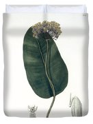 Asclepias Syriaca From Phytographie Duvet Cover