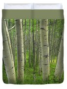 Aspen Forest In Spring Duvet Cover