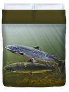 Atlantic Salmon Adults Migrate From Duvet Cover