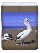 Australian Pelican On Beach Duvet Cover