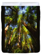 Autumn Sunlight Cast On Majestic Green Oregon Old Growth Forest  Duvet Cover