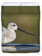 Avocet Feeding Duvet Cover
