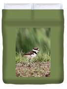 Baby - Bird - Killdeer Duvet Cover