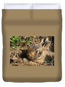 Baby Eastern Cottontail Duvet Cover