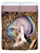 Baby Eastern Gray Squirrel Duvet Cover by Millard H. Sharp
