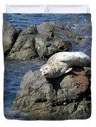 Baby Sea Lion On Rock At San Juan Island Duvet Cover
