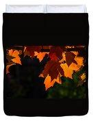 Backlit Autumn Maple Leaves Duvet Cover