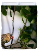 Bad Hair Day-female Northern Cardinal Duvet Cover