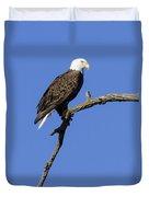 Bald Eagle 4 Duvet Cover