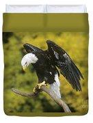Bald Eagle In Perch Wildlife Rescue Duvet Cover