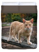 Barn Cat Duvet Cover by Rona Black