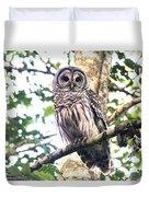 Barred Owl Staring Duvet Cover