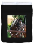 Bay Pinto Amish Buggy Horse Duvet Cover
