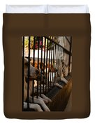 Beagles At Stowe Two Duvet Cover