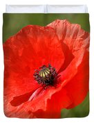 Beautiful Poppies 7 Duvet Cover
