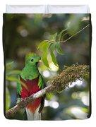 Beautiful Quetzal 1 Duvet Cover