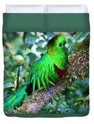 Beautiful Quetzal 2 Duvet Cover
