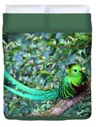 Beautiful Quetzal 3 Duvet Cover
