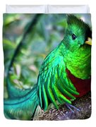 Beautiful Quetzal 4 Duvet Cover