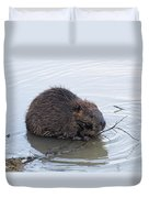 Beaver Chewing On Twig Duvet Cover