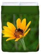 Bee On A Smooth Oxeye Duvet Cover
