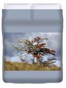 Beech Tree, Chile Duvet Cover