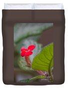 Episcia Flower Duvet Cover