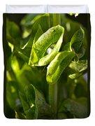 Bells Of Ireland Plant Duvet Cover