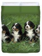 Bernese Mountain Puppies Duvet Cover