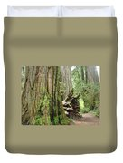Big California Redwood Tree Forest Art Prints Duvet Cover