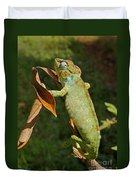 big chameleon of Madagascar 20 Duvet Cover