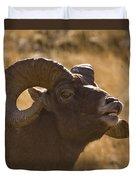 Big Horn Ram   #4856 Duvet Cover