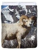 Big Horn Ram In Spring Duvet Cover