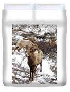 Big Horn Sheep In The Snow Duvet Cover