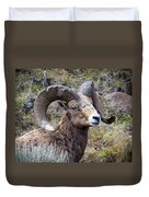 Bighorn Battle Scars Duvet Cover