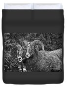 Bighorn Brothers In Grey Colorized Duvet Cover
