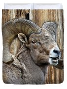 Bighorn Sheep Barnwood Duvet Cover
