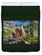 Bighorn Sheep Of Lake Minnewanka Duvet Cover
