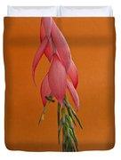 Bilbergia  Windii Blossom Duvet Cover by Heiko Koehrer-Wagner