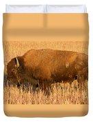 Bison At The Elk Ranch In Grand Teton National Park Duvet Cover