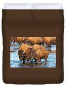 Bison Family In The Lamar River In Yellowstone National Park Duvet Cover