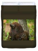 Bison Resting Duvet Cover