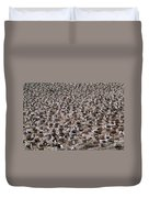 Black-browed Albatross Nesting Colony Duvet Cover by Art Wolfe