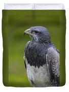 Black-chested Buzzard-eagle Duvet Cover