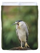 Black-crowned Night Heron Calling Duvet Cover