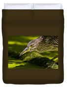 Black Crowned Night Heron Pictures 115 Duvet Cover